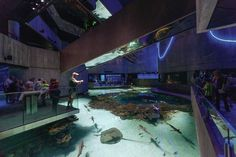 National Aquarium - World's Top 10 Aquariums