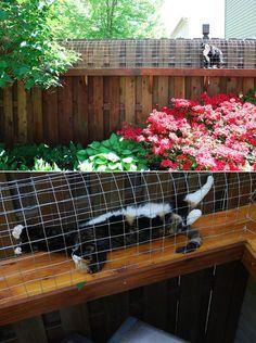 corredor para gatos sobre o muro