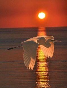 Beautiful Birds on Sunsets. Beautiful Sunset, Beautiful Birds, Beautiful Images, Animals Beautiful, Animals Amazing, Pretty Animals, Beautiful Life, Beautiful Moments, Amazing Photography