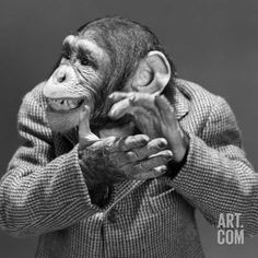1950s-1960s Monkey Chimp Chimpanzee Dressed Business Sport Jacket Clapping Hands