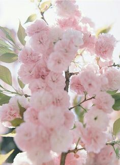 .Gorgeous spring blossoms!