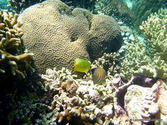 Snorkeling à Pulau Menjangan #Bali #Indonésie