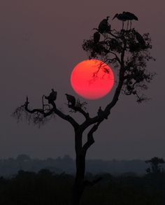 Serengeti Sunset - Kenya