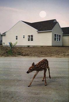 // Deer //