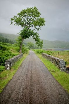 pagewoman:  Isle of MullbyHelena NormarkonFlickr