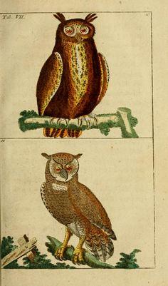Unterhaltungen aus der Naturgeschichte: Der Vögel, Vols 4-5, Gottlieb Tobias Wilhelm, 1795.