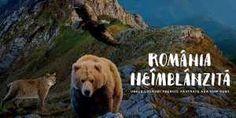 Romania neimblanzita (2018) Romania, Dogs, Animals, Animales, Animaux, Pet Dogs, Doggies, Animal, Animais