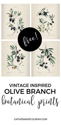 Free Olive Branch Printables