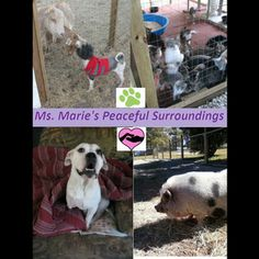 Please help or share/  Seniors Pet Sanctuary Food - Well it's the middle of the month and our financial donations are low   once again.  We have a wish list up for food donations that very few   people utilize ..  So here we are begging for help again.  If you   don't know about us see our web site; ...