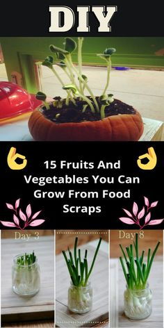 #DIY #Tips #Tricks #Ideas #Life #Hacks #Nifty #Ways Diy Crafts Hacks, Diy Projects, Diys, Organic Gardening, Gardening Tips, Regrow Vegetables, Garden Yard Ideas, Garden Bed, Growing Veggies