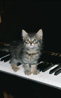 Kitten on Piano