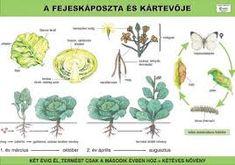 """Képtalálat a következőre: """"környezetismeret"""" Biology, Lily, World, Plants, Google, Science, Vegetables, School, Orchids"""