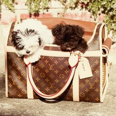 2 Shih Tzus in a bag ... We don't care if it's a Louis Vuitton, we want out