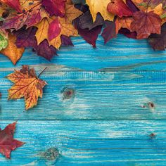 Thanksgiving Decorations - thanksgiving #thanksgiving #thanksgivingdecor #thanksgiving_decor #thanksgivingdecorations #thanksgiving_decorations
