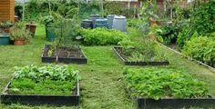 Easy Ways to Start An #Organic #Garden Today