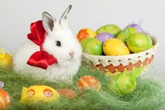 Happy Easter - bow, easter eggs, ribbon, bunny, cute, Easter, rabbit, Happy Easter, eggs, sweet, adorable