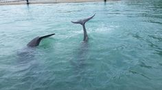 How dolphins say bye