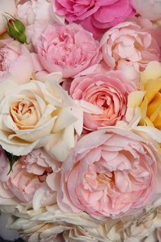 peonies, roses