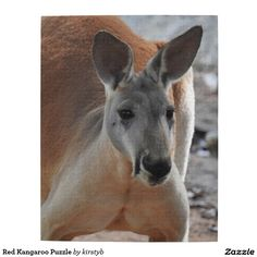 Red Kangaroo Puzzle
