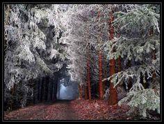 Waldweg von Heidi Zimmerli
