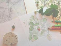 drawings by Mari Mochizuki, May 2015/スタジオから:季節の便り 2015年5月 ワイルドストロベリーの素描、庭の素描、イタリア紙、庭の植物を用いた構成。ハリネズミはローマの石のトラバーチン #望月麻里 mochizukimari.com