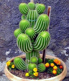What is the name of this cactus?