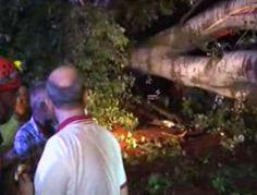 Dev ağaç onlarca kişinin üzerine devrildi! - Trabzon Haber | Trabzon Net Haber | Trabzonspor Haberleri