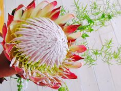Flower Recognition South Africa 79