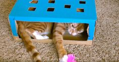 If A Cat Owns You Then You Must Learn These 5 Purrfect Cat Hacks