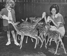 Belle Isle Zoo, 1960 - Detroit News Archives