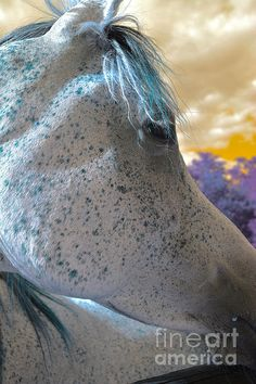 """Photos by Zulma, """"HORSES ARE ANGELS WITH INVISIBLE WINGS"""""""