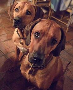 These gorgeous pups cannot help but smoulder in front of the camera, every single time.