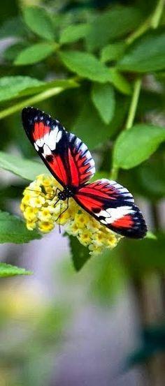 Consideravelmente Butterflie ~ Dreamy Nature