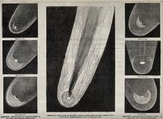 Astronomy: various views of Donati's comet in the night sky. CC-BY Wellcome Library. Engraving Illustration, Illustration Art, Technical Illustration, Wellcome Collection, White Sky, Hubble Space Telescope, Book Projects, Work Inspiration, Shooting Stars