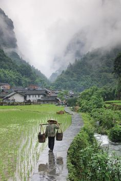 A farmer with his image reflected in the well worn pathway makes his way back to the village of Dehang in the misty mountains of Hunan Provence.
