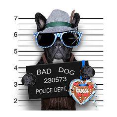 Barry Déco Toile bad dog noir 40x40cm