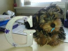 How cute! Beautiful Words, Beautiful Things, Baby Fancy Dress, Barefoot Shoes, Yorkies, Baby Crafts, Baby Ideas, Ballet, Angel