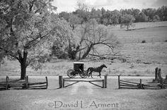 Amish Buggy, Black and White, LaGrange