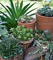 Resultado de imagem para jardinagem em vasos