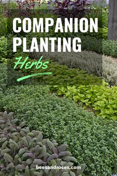 ✿ Companion Planting Herbs: What Herbs Grow Well Together - Crafts & DIY~ Home Decor ~ Garden. - ✿ Companion Planting Herbs: What Herbs Grow Well Together – Crafts & DIY~ Home Decor ~ Gardenin - Herb Garden Design, Diy Herb Garden, Garden Plants, Garden Ideas, Shade Garden, Chives Plant, Basil Plant, Herb Companion Planting, Organic Gardening