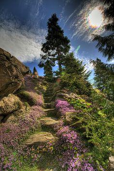 """Ohme Gardens, Wenatchee, WA"" BeauTAiful! They MUST be faeries thriving here! ♥"