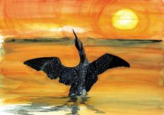 Loon Morning – Limited Edition Print