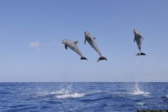 Celebrate National Dolphin Day With A Look At These Unique Dolphin Species (PHOTOS)