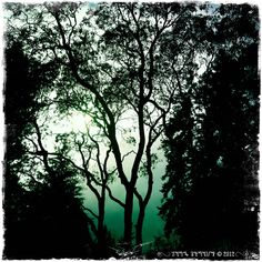 .: Madrona Tree at the edge of Hekate's Forest :. From the Arte of Lady Straif, Photo by Kerry Ryan Simmons © 2012.