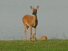 """""""Deers...;)"""""""