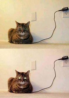 充電前のネコと充電後のネコ。