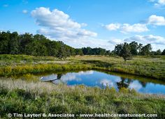 Savanna with Pond - Shaw Nature Reserve - #calming #nature #landscape