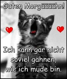 Funny good morning pictures To post - Lustige gute Mo. Good Morning Funny, Good Morning Picture, Morning Pictures, Morning Humor, Morning Quotes, Yin Yoga, His Hands, Just Love, Funny Cats