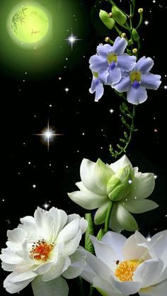 Good Night sister and all,God bless,sweet dreams,xxx❤❤❤✨✨✨🌙 Flowers Gif, Flowers Nature, My Flower, Beautiful Flowers, Beautiful Moon, Beautiful Images, Flower Wallpaper, Wallpaper Backgrounds, Foto Gif