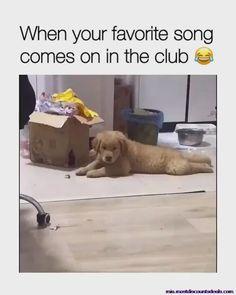 Funny Animal Jokes, Funny Dog Memes, Funny Dog Videos, Funny Video Memes, Funny Animal Pictures, Funny Captions, Funny Quotes, Funny Facts, Funny Sister Memes